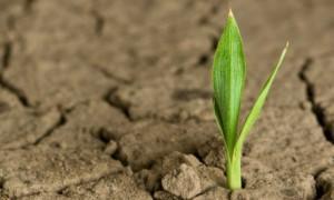 Poselství bambusového semínka: Vytrvalost v každém z nás