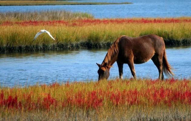 horse-60153_1280
