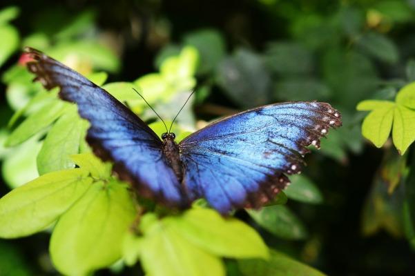 butterfly-517667_1280