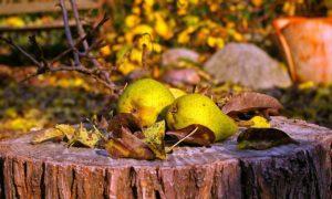 4 zdravé a chutné recepty z hrušky