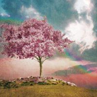 Vztah: Pečujte o něj jako zahradník o strom!
