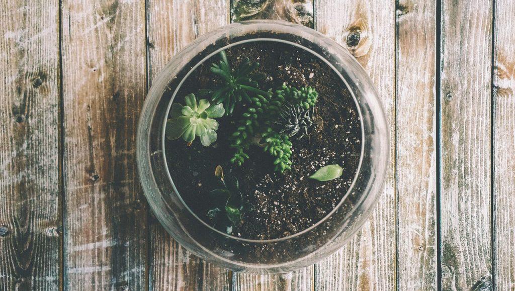 rostlina, radost